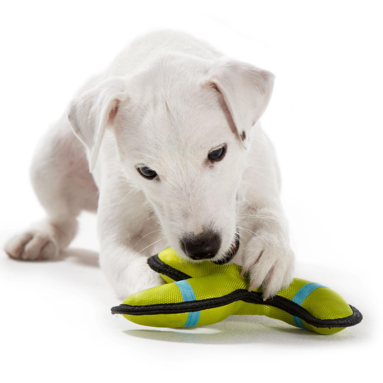 Hundespielzeug Outdoor - Training Toys