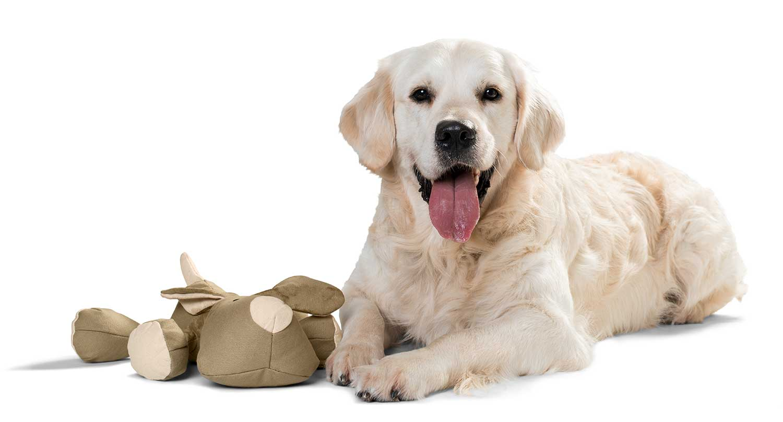Hundespielzeug Canvas